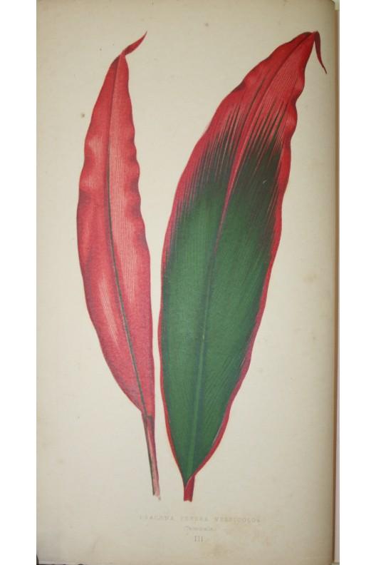 Les plantes à feuillage coloré. Lowe et Howard / Ed Rothschild 1865. 60 gravures